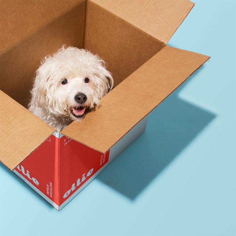 宠物食品公司Ollie全新品牌形象设计